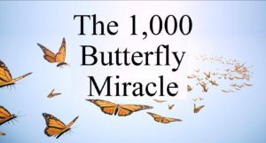 1000 Butterfly Miracle